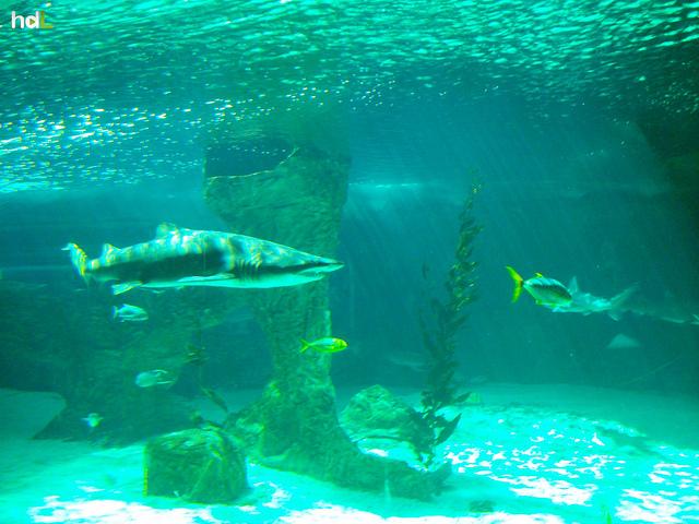 HDL Luces de acuario