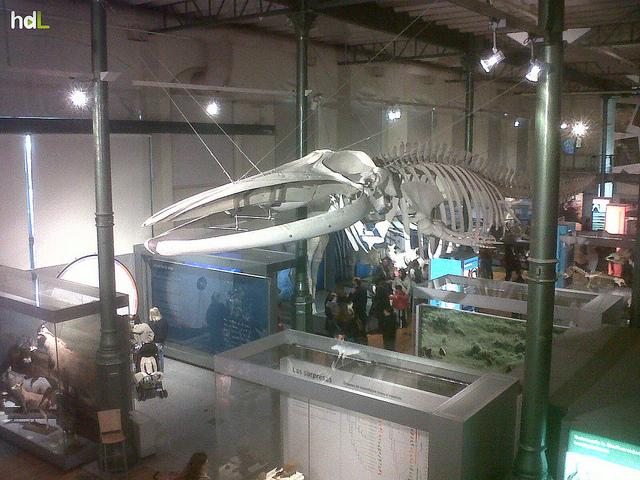 HDL Esqueleto de ballena