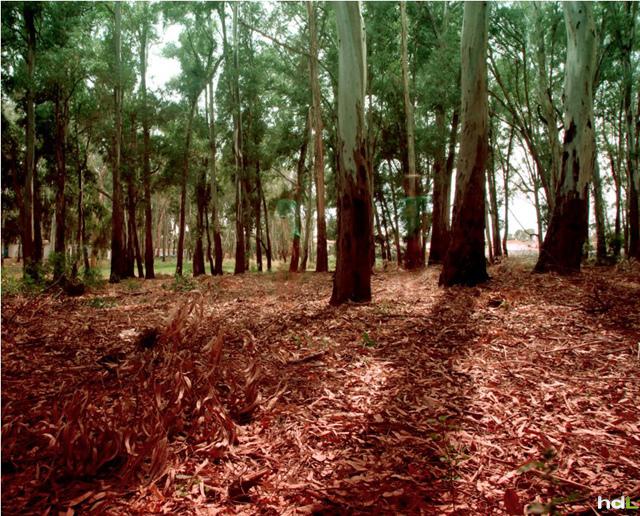 HDL. Bosque mediterráneo. San Pedro de Alcantara