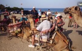 """La empresa 'Camellos de Almería' ofrece rutas turísticas a lo largo de las playas de Mojácar, en Almería, en las que los turistas conocerán la historia de la localidad, así como todo tipo de detalles sobre estos animales del desierto. Su encargada, la alemana Úrsula Schulz, es una veterinaria que siempre ha trabajado con camellos y que a través de esta empresa, que fundó hace seis años, encontró la forma perfecta de ganarse la vida a través de su pasión por estos """"jorobados"""". En cada uno de los recorridos, trata de transmitir su conocimiento y pasión por los camellos a los turistas."""