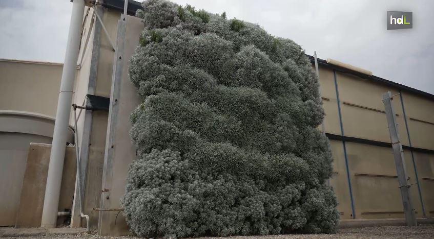 Autov as con jardines verticales contra el ruido y la for Historia de los jardines verticales