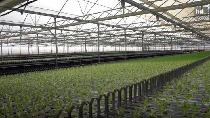 El invernadero más inteligente de Europa se encuentra en la pedanía Guazamara de Cuevas del Almanzora, en Almería. Es totalmente automático, se autoabastece de energía solar y eólica y apuesta por el máximo ahorro de agua. Está en funcionamiento todo el año y produce 3.500.000 plantas anuales por hectárea. Su sistema automático permite que el trabajador no se mueva de su puesto de trabajo durante todo el proceso, desde la plantación a la recolección.
